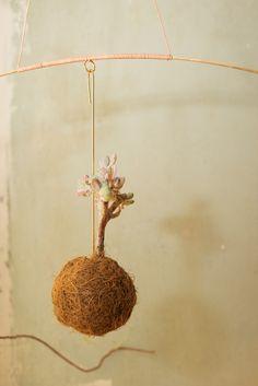 Planteplanter (Kaja Skytte)