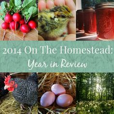 Linn Acres Farm: 2014 On The Homestead, A Year in Review