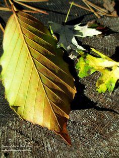 Fall leaves (Garden of Len & Barb Rosen)