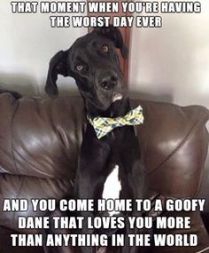 "Figure out additional information on ""great dane puppies"". Visit our website. Great Dane Funny, Great Dane Dogs, I Love Dogs, Puppy Love, Cute Dogs, Cute Dog Costumes, Dog Halloween Costumes, Scary Movie Characters, Dane Puppies"