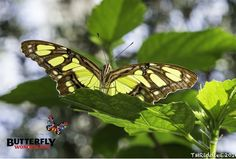 Its Fly Away Friday!  Check out this beautiful butterfly photographed by Tina Riddle.  Enjoy the rest of your week!