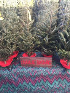 Christmas Eve & Charlie Brown tree