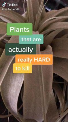 Indoor Garden, Garden Plants, Indoor Plants, Home And Garden, Indoor Plant Decor, Hanging Plants, Potted Plants, House Plants Decor, Easy House Plants