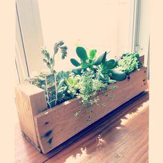 Succulent cactus nature
