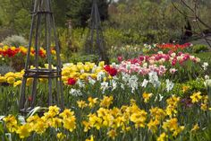 Holiday plants in white flower farms greenhouse flower farm white flower farms spring bulb display april mightylinksfo