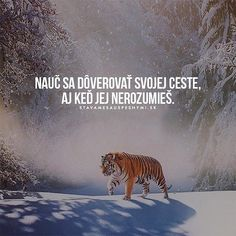 Tak tak  WEB NA  @stavamesauspesnymi_sk  #stavamesauspesnymi_sk #úspech #cesta #dôvera #viera True Words, Quotations, Funny Pictures, Writing, Photo And Video, Motivation, Sayings, Instagram Posts, Quotes