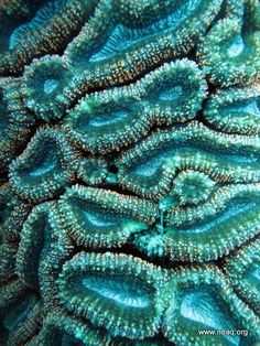 Coral Look at the colors! Maybe a texture for clay. I have some real coral you could use as texture! Deep Blue Sea, Red Sea, Patterns In Nature, Textures Patterns, Nature Pattern, Shades Of Turquoise, Teal, Turquoise Color, Fotografia Macro