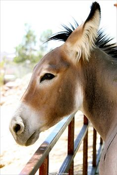 April, the female Donkey by Magpie-Dreams, via Flickr