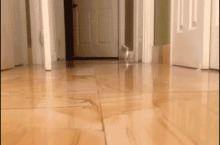 Short cat