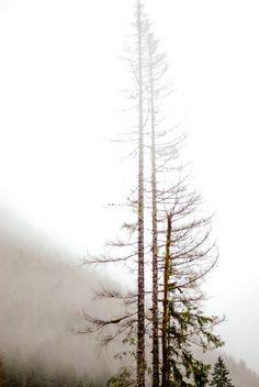 ♥♥ trees.