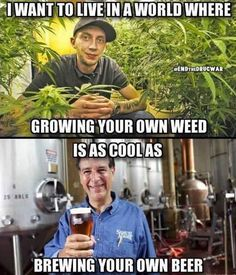 Growing weed is easy. Maximizing yield can be too...