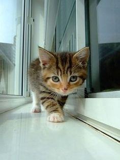 little hunter on vi.sualize.us
