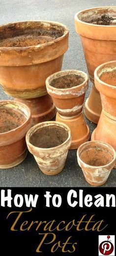 How To Clean Terracotta Pots (Clean Clay Pots In 3 Easy Steps!) Why buy brand new clay pots when you Clay Pot Projects, Clay Pot Crafts, Shell Crafts, Clay Flower Pots, Flower Pot Crafts, Organic Gardening, Gardening Tips, Urban Gardening, Gardening Books
