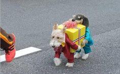 El blog del NEGRO Cortés: Disfraz de Halloween para perritos