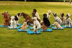 A unique combination of dog training - http://www.dog-ramblers.co.uk/  #DogTrainingManchester