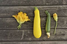 The average clitoris is the size of a medium zucchini . | 19 Eye-Opening Facts About Sex