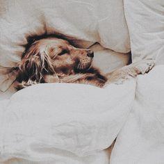 Dormir es una de las importantes cosas de la vida donde no llenamos de energia y de serenidad