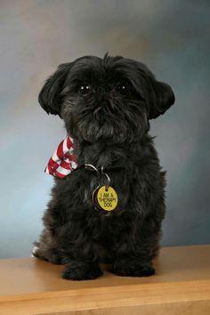 Shih Tzus Free Shipping Cute Animals Dogs Shirt Fur Babies