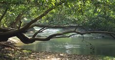 Kuruva dweep wayanad another mindblowing scene. Enjoy wayanad destinations with resort in Kerala. Forest And Wildlife, Hill Station, Tourist Places, Trip Planning, Tourism, Places To Visit, Scene, Island, Kerala