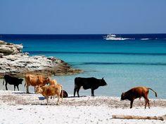Corsica Golfe - Le golfe de Saint-Florent est un golfe de la mer Méditerranée qui se situe en Corse, autrefois appelé aussi le golfe de Sainte-Marie de Nebbio