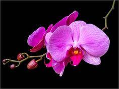 Leinwandbild 70 x 50 cm: Lila Orchidee von Wonderful Dream Picture - fertiges Wandbild, Bild auf Keilrahmen, Fertigbild auf echter Leinwand, Leinwanddruck Unbekannt,http://www.amazon.de/dp/B00IPBG80W/ref=cm_sw_r_pi_dp_OaqCtb1EV3D4KMR0