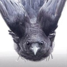 Komst rechtsaf u, kraai in vlucht Photograph - ondertekend Fine Art afdrukken door June Hunter, Crow minnaar cadeau door junehunter op Etsy https://www.etsy.com/nl/listing/254322498/komst-rechtsaf-u-kraai-in-vlucht