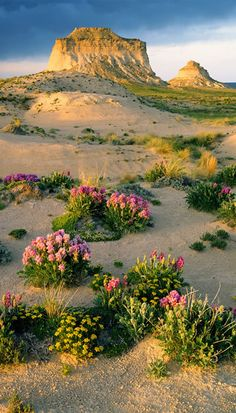 Pawnee National Grassland, northeastern Colorado~John Fielder