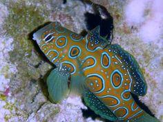 The 5 hottest reef aquarium fish of 2012 Marquee Reef Builders   The Reef and Marine Aquarium Blog