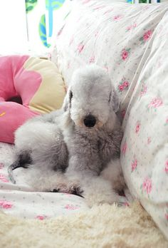 Bedlington Terrier - it's a lambdog. :)  had one when we were kids! her name was Holly.