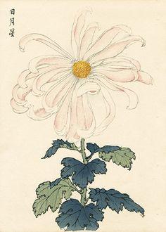 Keika Hasegawa Chrysanthemum dřevěnou tisky 1. vydání 1893