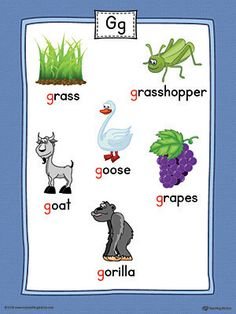 Letter G Word List with Illustrations Printable Poster (Color) Worksheet.Use the Letter G Word List with Illustrations Printable Poster to play letter sound activities or display on a classroom wall. G Letter Words, G Words, Alphabet Words, Alphabet Pictures, Alphabet Charts, Phonics Sounds, Alphabet Phonics, Teaching The Alphabet, Letter Worksheets For Preschool