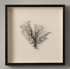 Preserved Sea Fan with Ivory Mat - Square