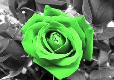 green-rose-cool-hd.jpg (891×630)