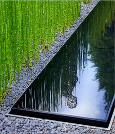 Larry likes bamboo and rocks, and I think this is also a cool way to provide separation and privacy in an area.  Anthony Paul  Landscape design
