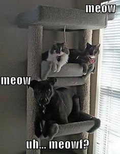 Meow, Meow Uhhh...,  Click the link to view today's funniest pictures!