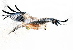 Digital bird