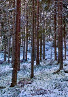 Pines is a photograph by Jouko Lehto. Männyt - Pines. Seitsemisen kansallispuisto - Seitseminen National Park. Source fineartamerica.com Lake Beach, Forest Path, Beautiful Forest, Finland, Paths, National Parks, Hiking, Nature, Landscapes