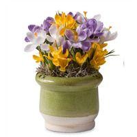 Crocus Bulb Garden In A Ceramic Pot, 1/15