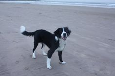 This is lovely photo of Darryls sisters dog at the beach