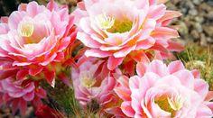 membuat bunga anggrek sakura dari kantong plastik,bunga matahari dari kantong…