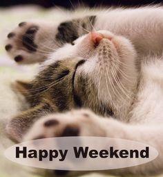 Happy WeekEnd erhol dich gut Weekender, When September Ends, Online Pet Store, Pet News, Happy Weekend, Dog Life, Dog Days, Good Night, Cats Of Instagram