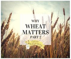 Why Wheat Matters in the U.S. you may not choose or require wheat in your diet, but the truth is the wheat grown here feeds someone else's hungry mouth.