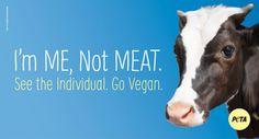 Make a resolution to help animals