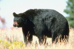The Best Wildlife Biology Schools