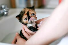 What Did You Just Do To Me? | Cutest Paw