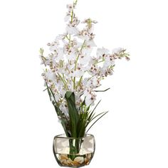 The Silk Orchid Arrangement in White is a beautiful decorative piece to brighten up dull or vacant spots. White is the dominant color of this arrangement.The white flowers with big flat petals are well complemented by rich dark green leave. This showpiece is perfect for spicing up your personal as well as working space. No matter where you put it, the flower arrangement is sure to win admiration from your guests. The small sized faux flower arrangement is perfect to represent the warm…