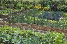 Voici une suggestion de bonnes associations de légumes, fleurs et plantes aromatiques pour limiter les traitements au potager et jardiner bio.