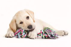 10 Indestructible Dog Toys | Dog Breeds FAQ