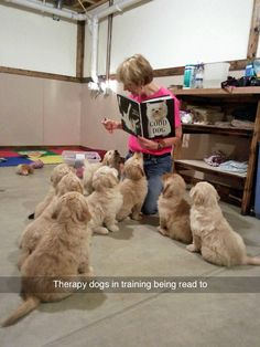 Dog fact of the week: Golden Retrievers, Labs, and German Shepherds are the three most common breeds of service dog in the US.