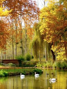 Natural Fall beauty down by the pond!